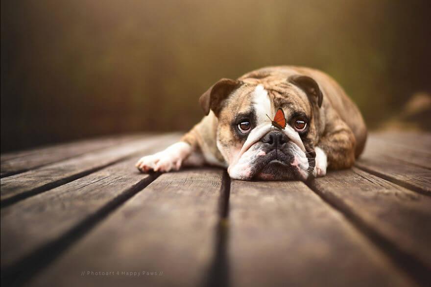portraits-of-dogs-anne-geier-freeyork-2