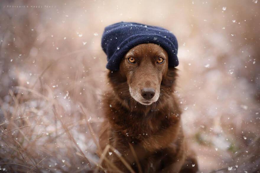 portraits-of-dogs-anne-geier-freeyork-22