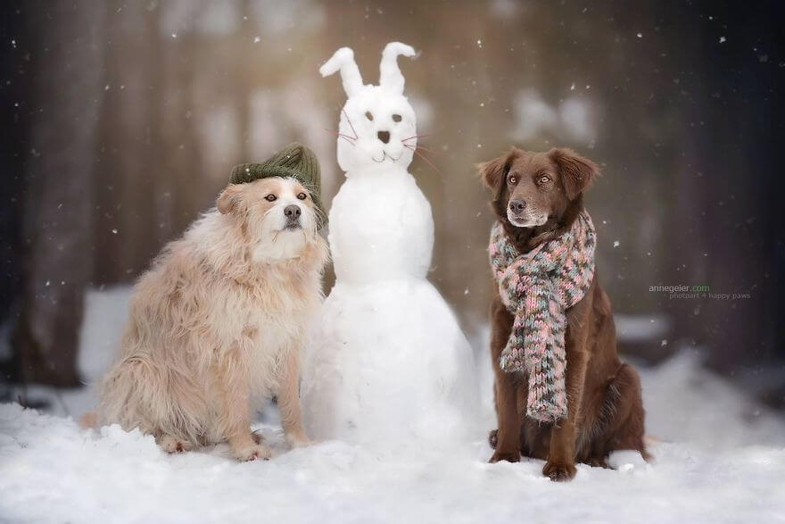 portraits-of-dogs-anne-geier-freeyork-23
