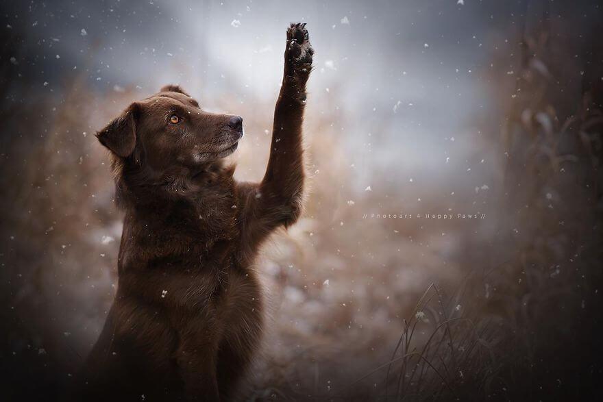 portraits-of-dogs-anne-geier-freeyork-24
