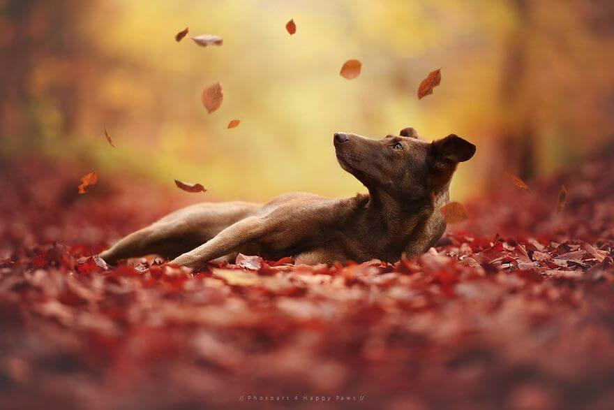 portraits-of-dogs-anne-geier-freeyork-26