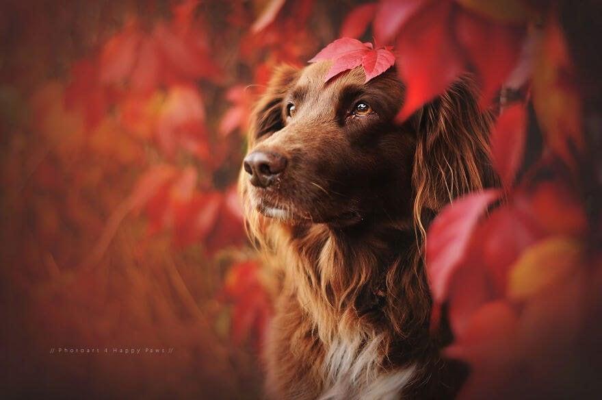 portraits-of-dogs-anne-geier-freeyork-3