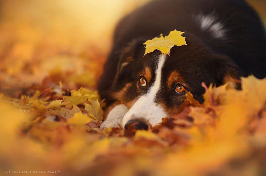 portraits-of-dogs-anne-geier-freeyork-4