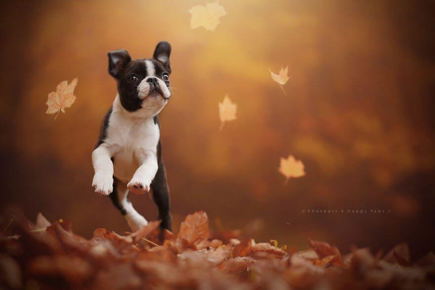 portraits-of-dogs-anne-geier-freeyork-5