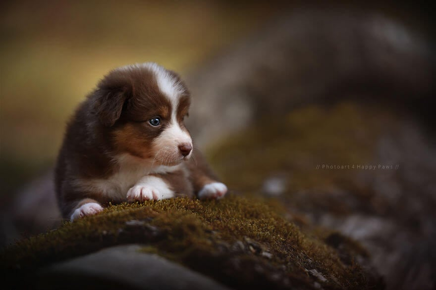 portraits-of-dogs-anne-geier-freeyork-6