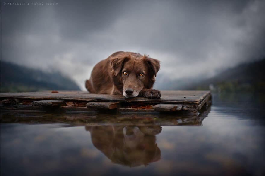 portraits-of-dogs-anne-geier-freeyork-8