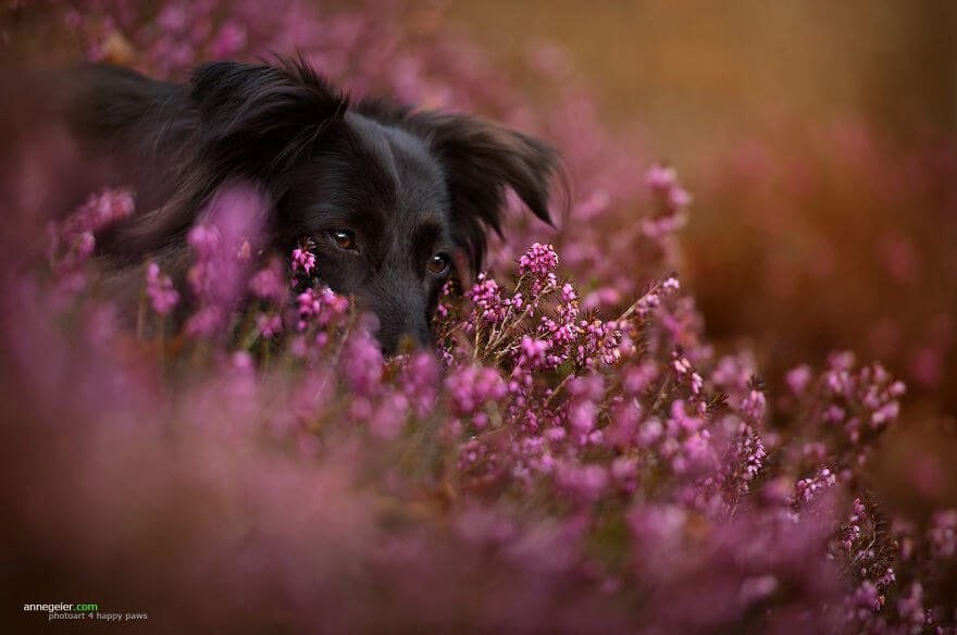 portraits-of-dogs-anne-geier-freeyork-9