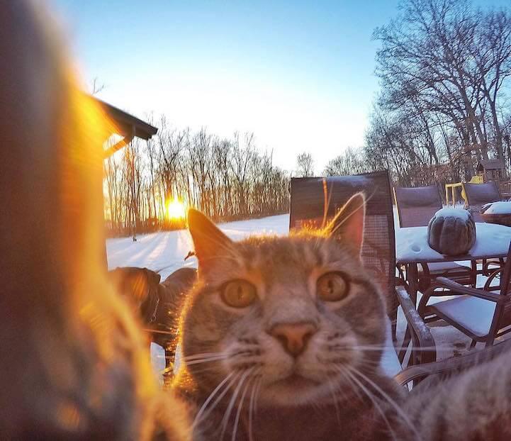 manny-selfie-cat-fy-1