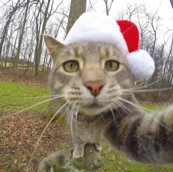manny-selfie-cat-fy-10