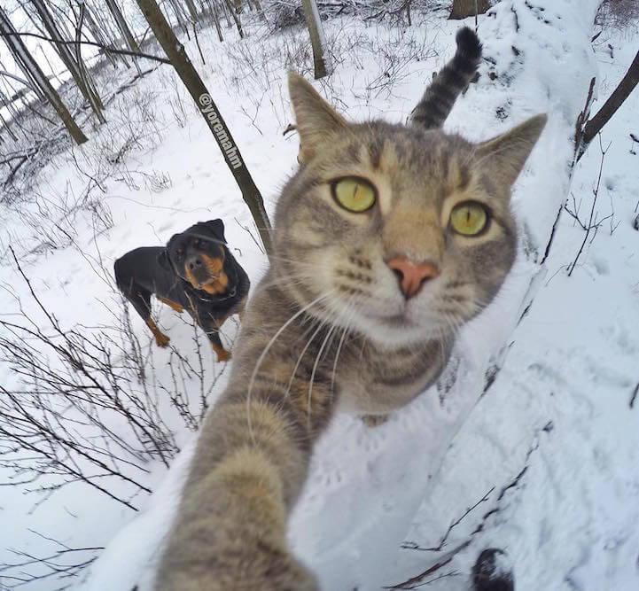 manny-selfie-cat-fy-11