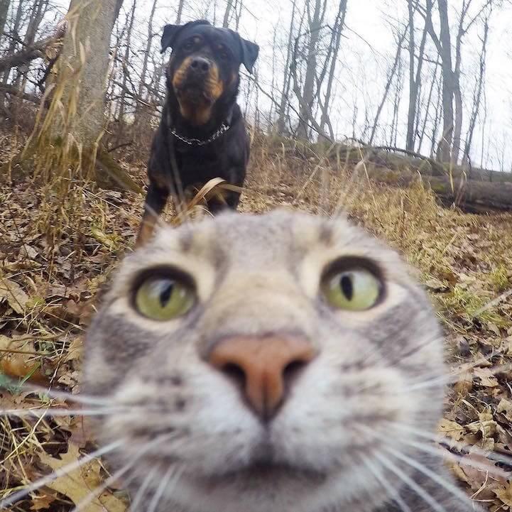 manny-selfie-cat-fy-3