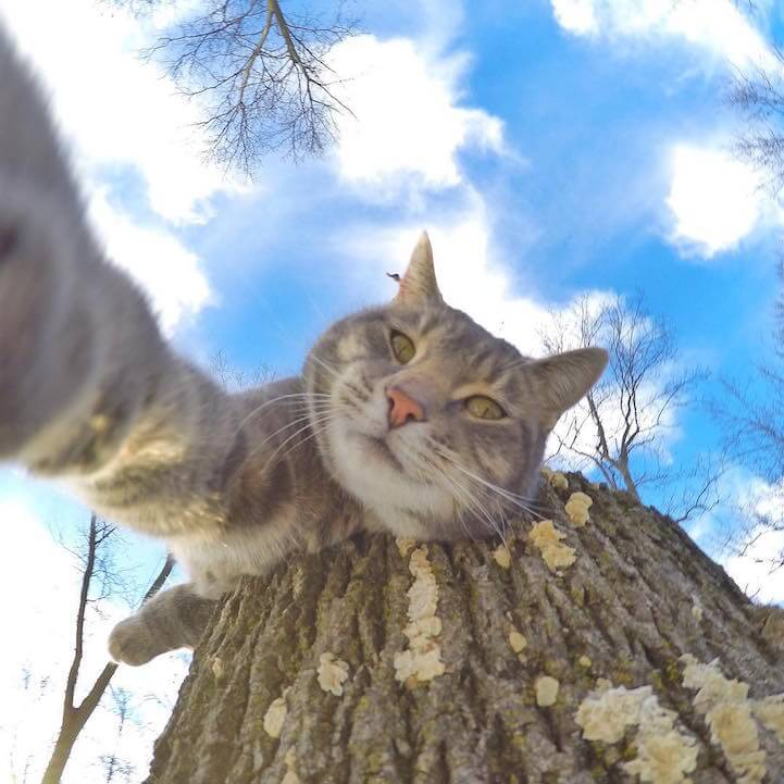 manny-selfie-cat-fy-4