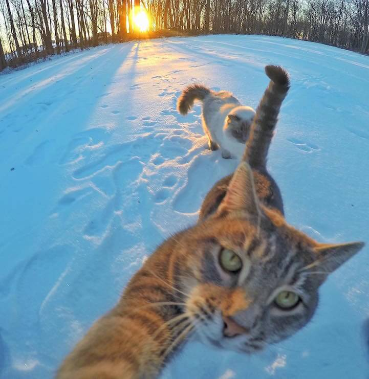 manny-selfie-cat-fy-5