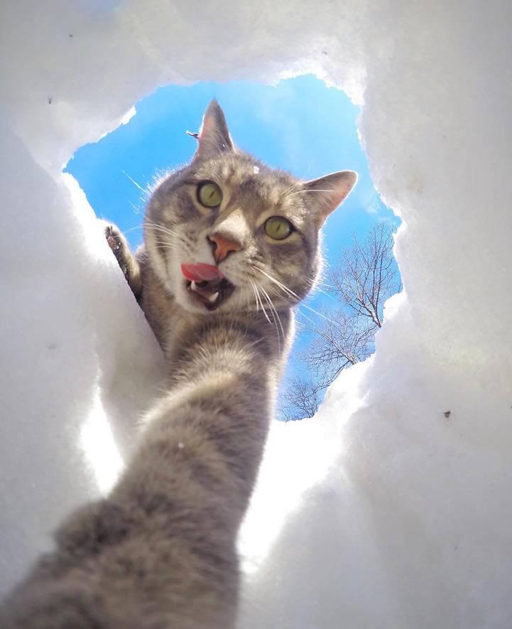 manny-selfie-cat-fy-6
