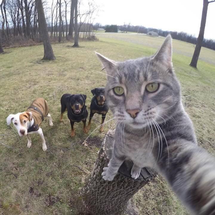 manny-selfie-cat-fy-7