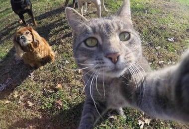 manny-selfie-cat-fy-8