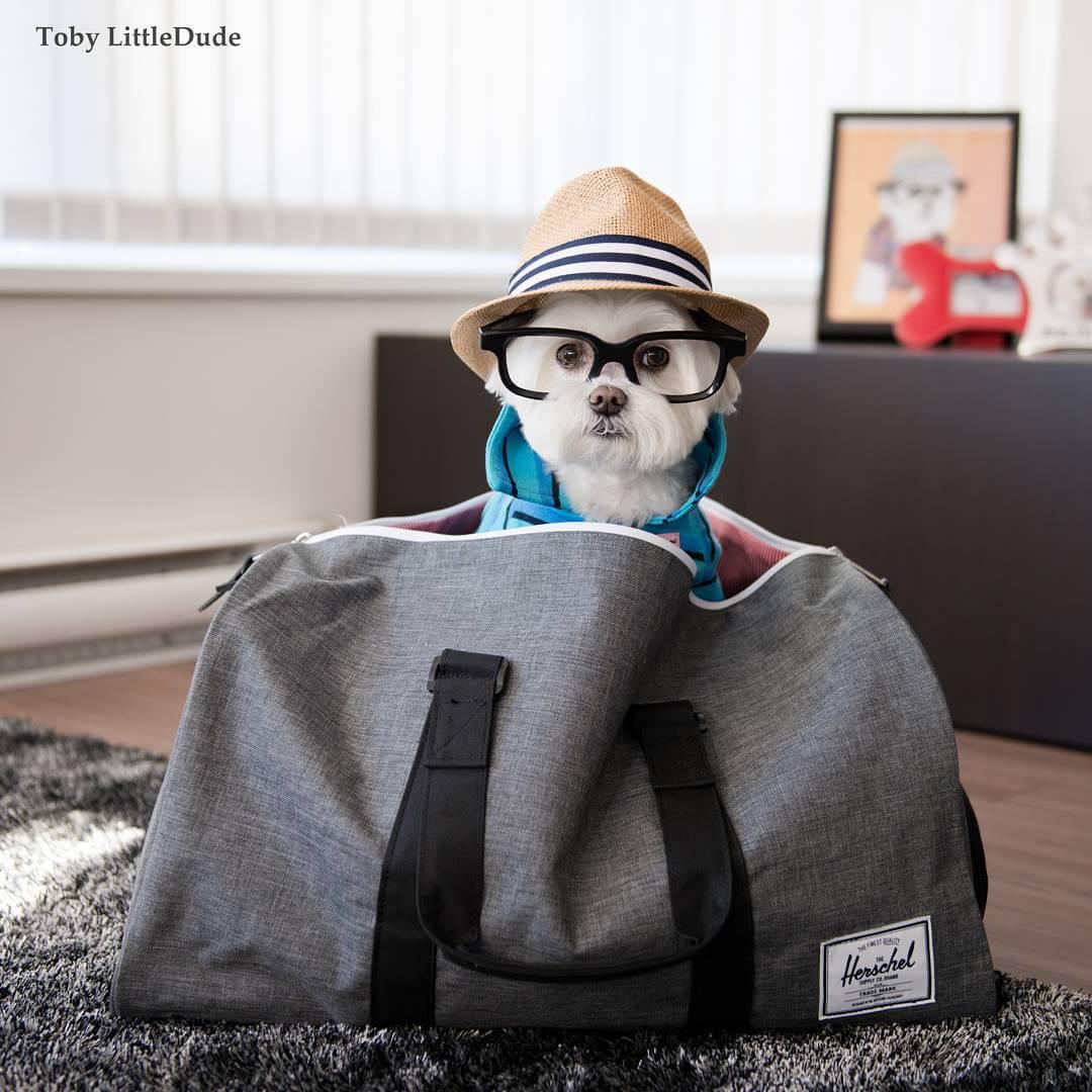 toby-littledude-fy-16