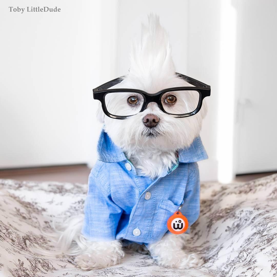 toby-littledude-fy-6