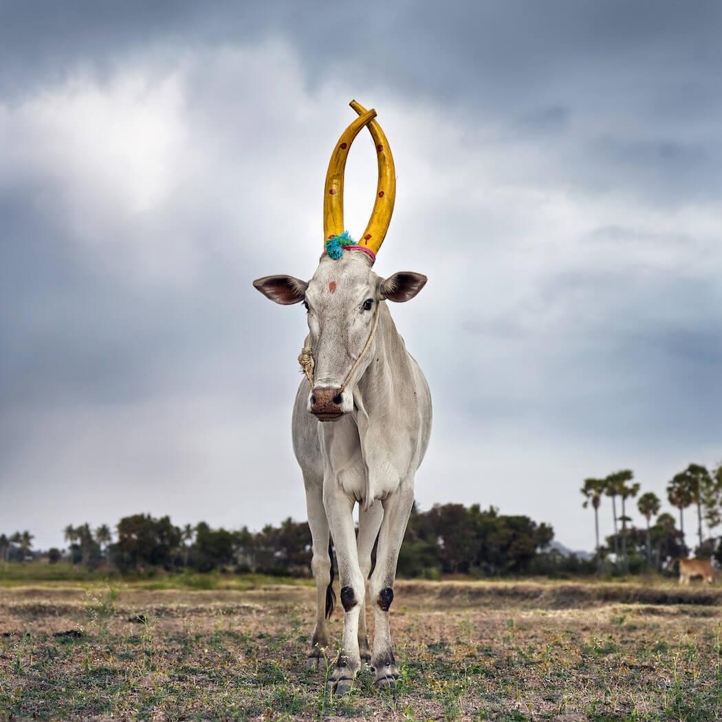sacred-animal-daniel-naude-fy-4