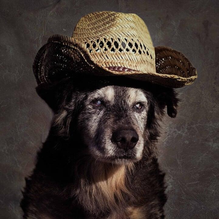 tammy-swarek-shelter-dogs-fy-10