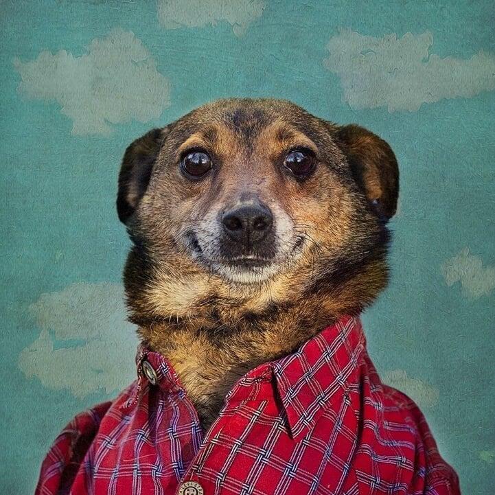 tammy-swarek-shelter-dogs-fy-11