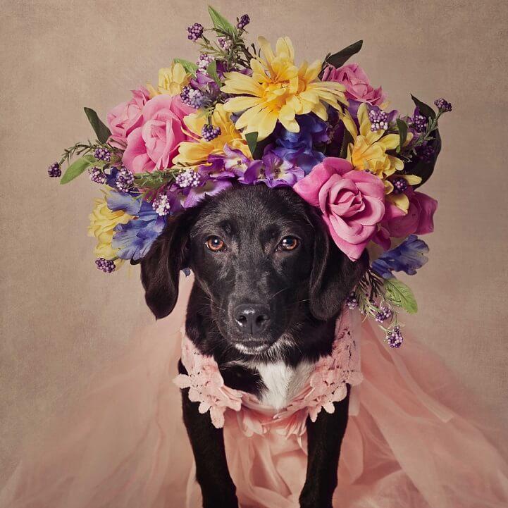 tammy-swarek-shelter-dogs-fy-13