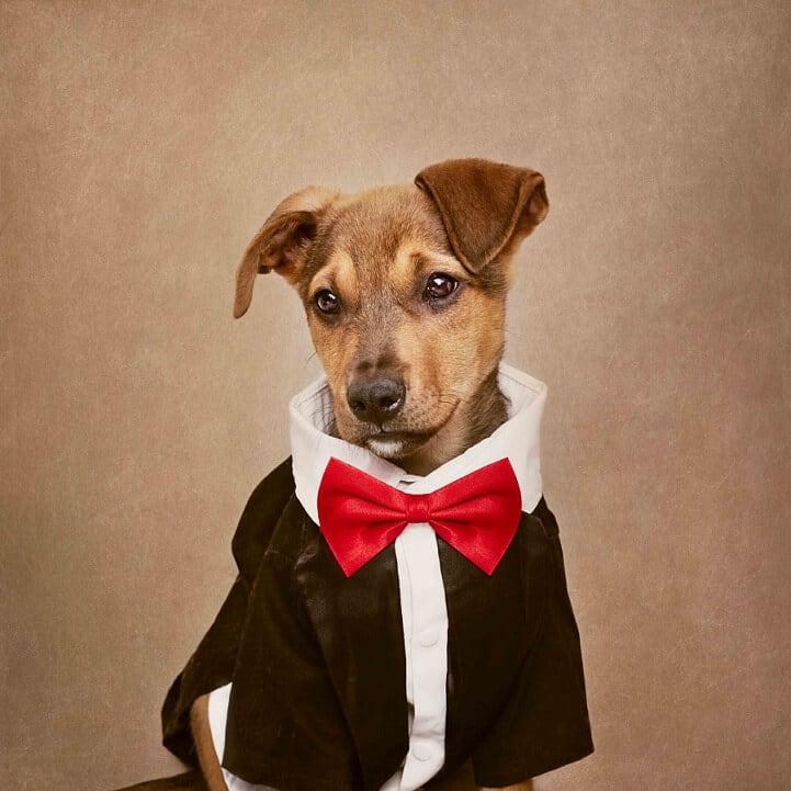 tammy-swarek-shelter-dogs-fy-2