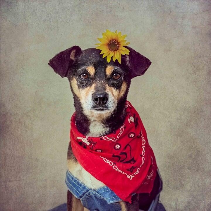 tammy-swarek-shelter-dogs-fy-3