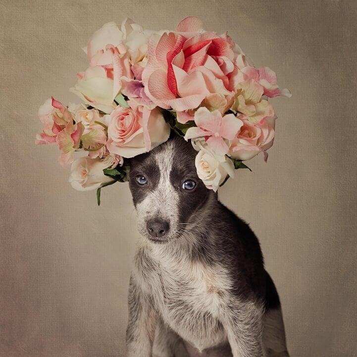 tammy-swarek-shelter-dogs-fy-4