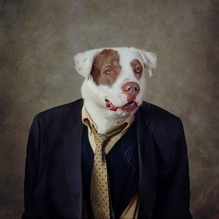tammy-swarek-shelter-dogs-fy-5