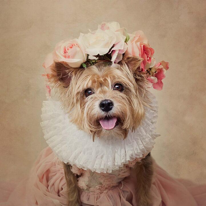 tammy-swarek-shelter-dogs-fy-6