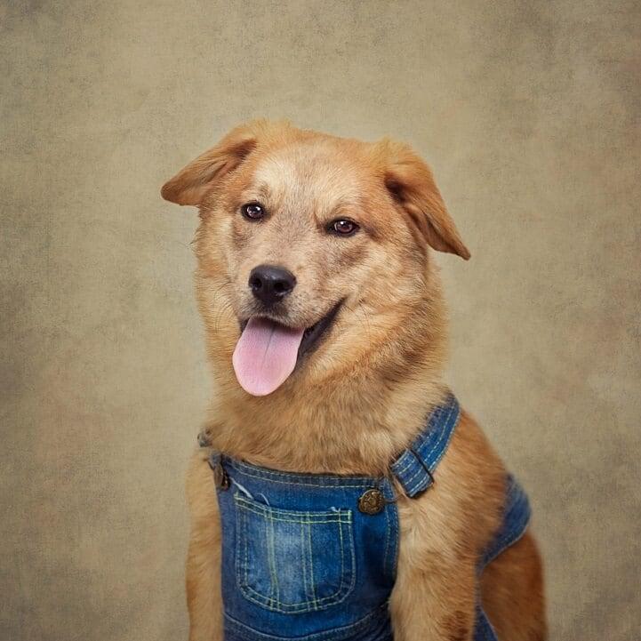 tammy-swarek-shelter-dogs-fy-7