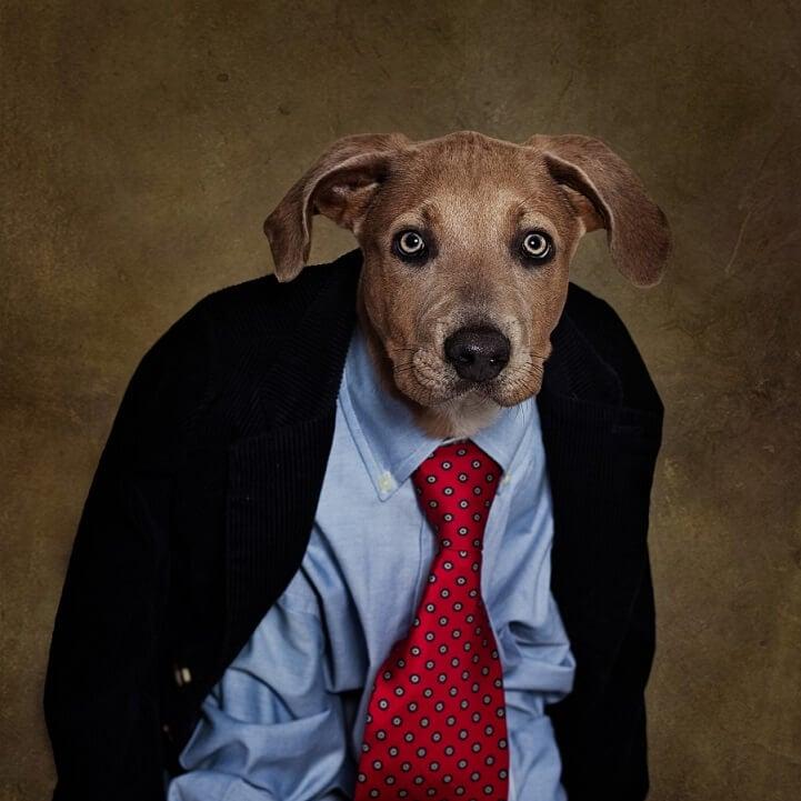 tammy-swarek-shelter-dogs-fy-9