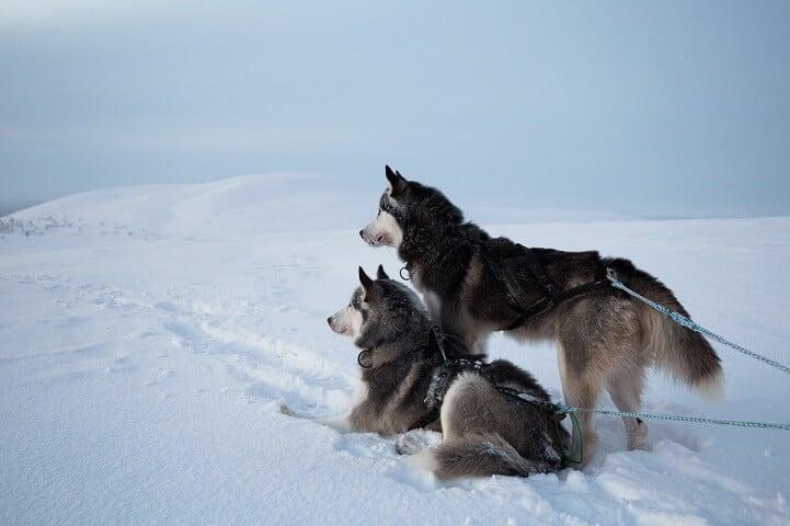 brice-portolano-arctic-love-fy-18