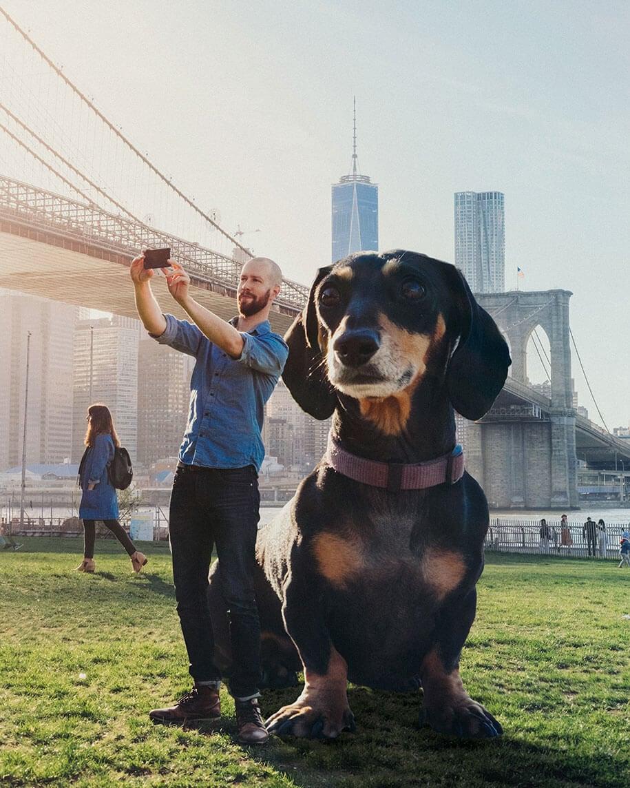 vivian-dachshund-giant-dog-2