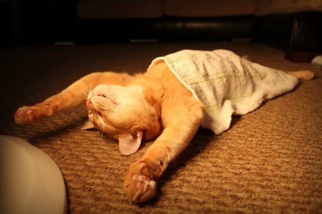 4660155 R3L8T8D 650 funny sleeping cats 1 1