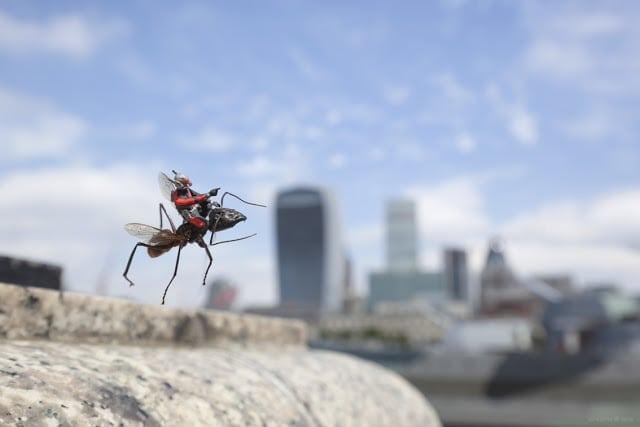 Ant Man Installation Marvel 02