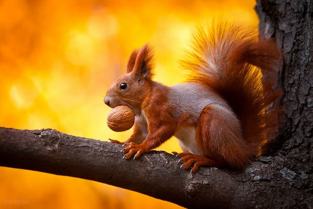 Art Photography Of Squirrels 1