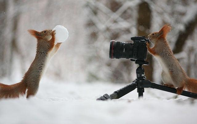 Cute Squirrel Photo Shoot 0
