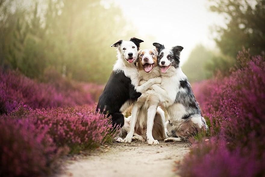 Dogs by Alicja Zmyslowka 01