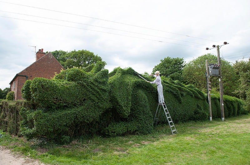 JohnBrooker hedge dragon 01