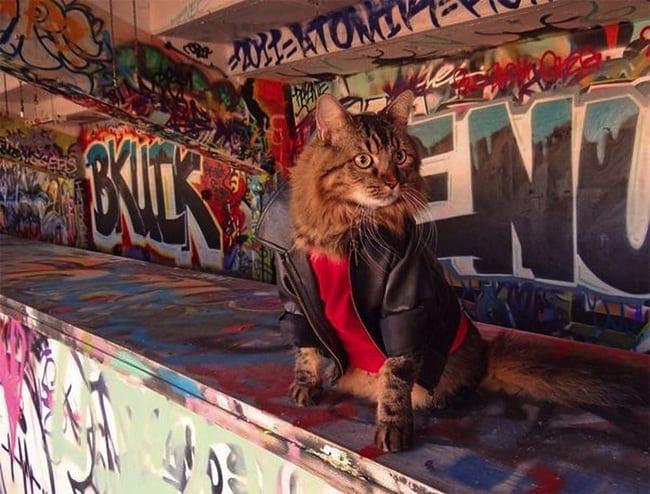 Lorenzo the Cat by Joann Biondi 2014 01