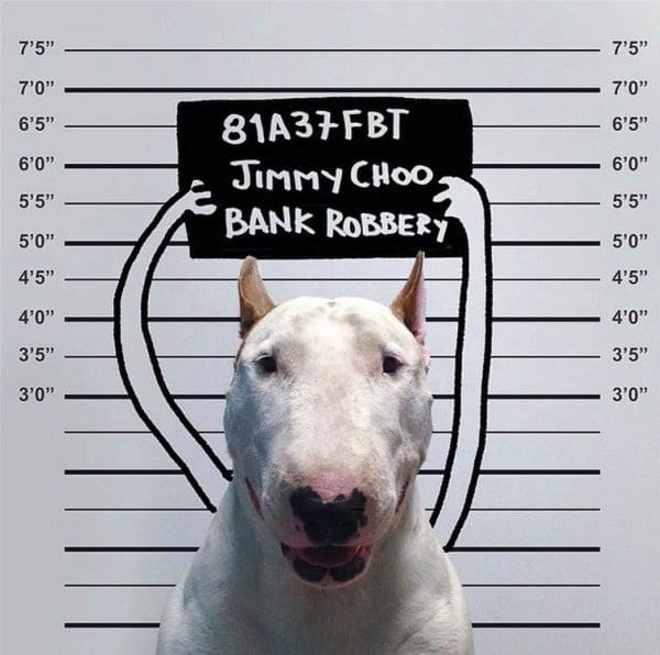 Rafael Mantesso Creates Playfull Illustrations Around His Bull Terrier 2014 01