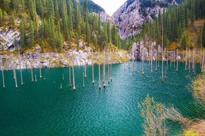 Sunken forest kazkhstan 6