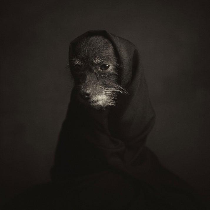 Vincent Legrange Expressive Animal Portraits 2