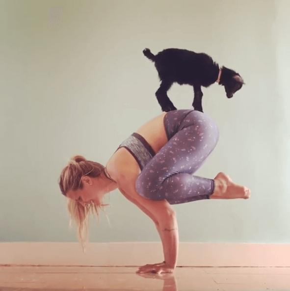YogaGoat0