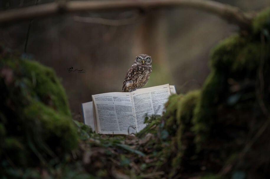 animal photo owl hide rain mushroom podli tanja brandt 1