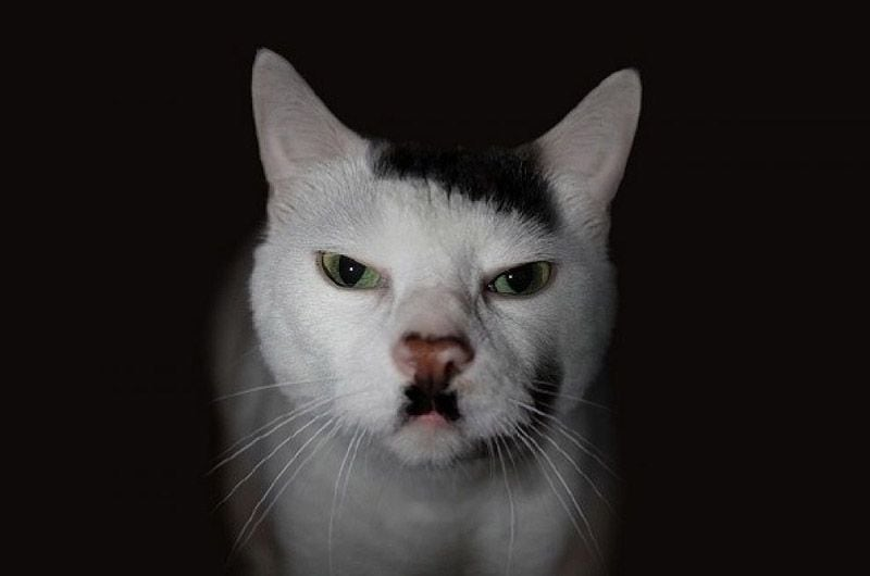 animalswmustache15
