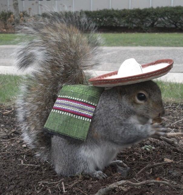 costume squirrel whisperer sneezy nary krupa 2