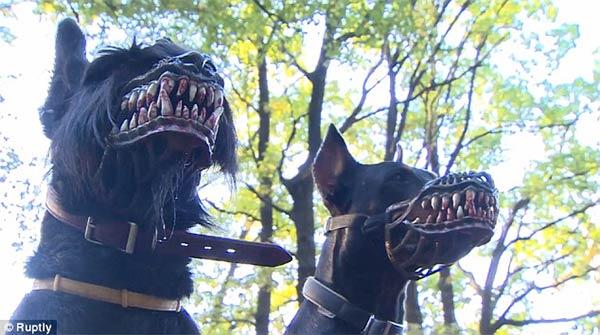 dog muzzle1